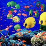 Marine-Life-sea-life-7591156-1600-1200